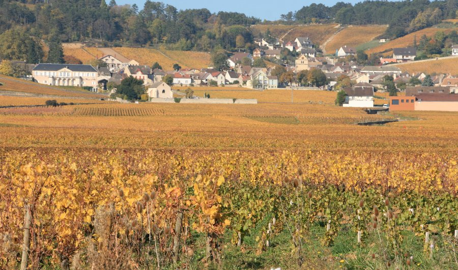 Soft colors of autumn on the vines of Volnay